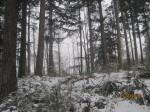 Snow - my backyard