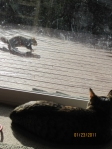 My Trex deck, the squirrel and cat