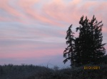 Trees in silouette & pink clouds
