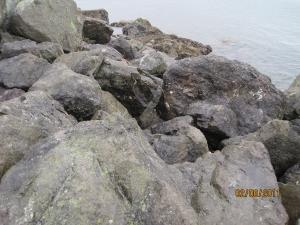 Wet rocks on Bellingham Bay