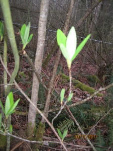 Early leaves sprouting