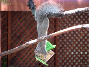 Bird feed thief