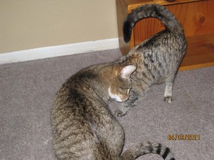 Basement cats