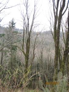 Lost Lake trail view