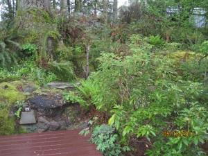 backyard II