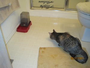 kitty vs. water dish