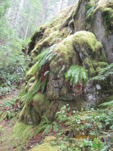 moss and fern covered rock along trail