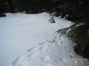 my snowshoe tracks