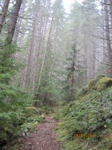 trail starts