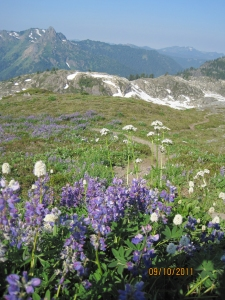 Wildflowers at Yellow Aster Butte